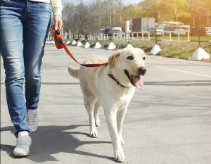 5 Best Dog Leashes