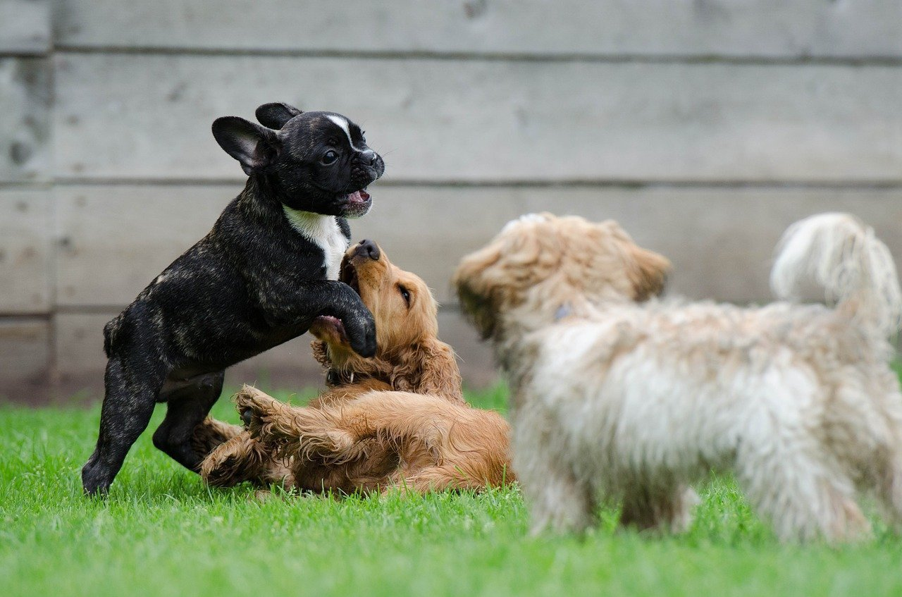 , Proper Socialization for your Puppy: