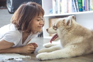 Engage and motivate your dog